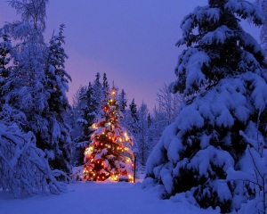 CHRISATMAS TREE WOODLAND WALLPAPER